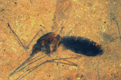 Ancient bug's last supper of blood still in fossil