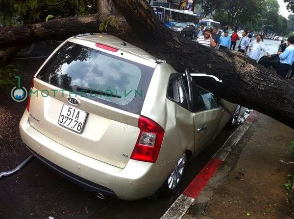 Cây đổ đè bẹp ô tô giữa trung tâm Sài Gòn
