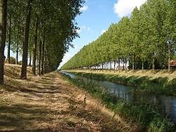 http://fr.wikipedia.org/wiki/Peuplier
