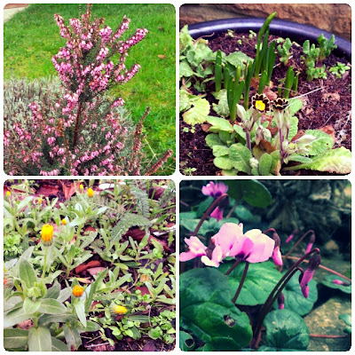 craftypainter: January in the garden