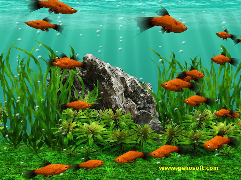 Moving Fish Wallpapers using as backgrounds
