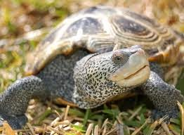 Terrapins and Turtles: Terrapin Turtle Care