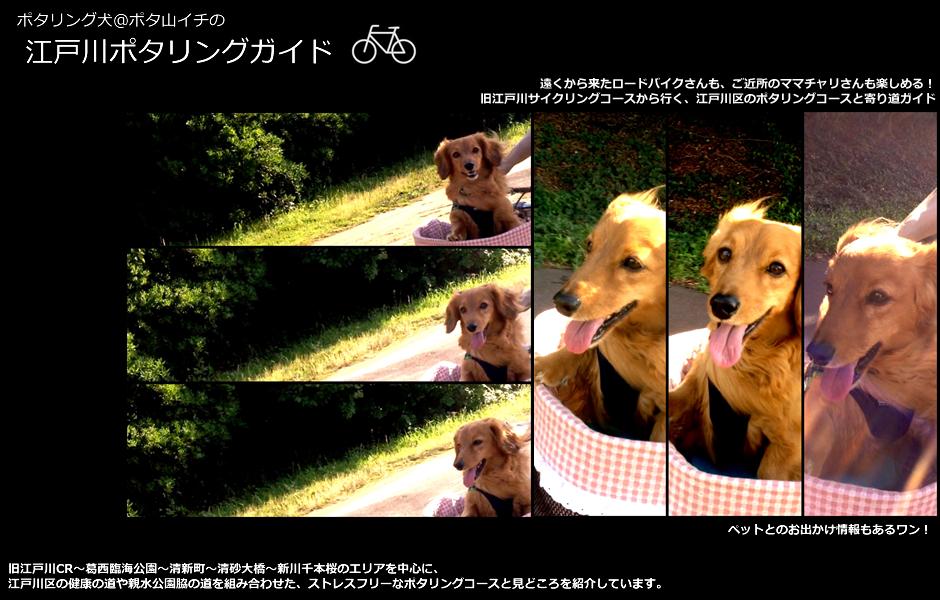 ポタリング犬@ポタ山イチの江戸川ポタリングガイド