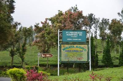 10 Tempat Wisata di Puncak Bogor yang Menawan
