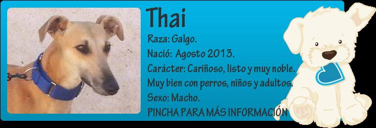 http://mirada-animal-toledo.blogspot.com.es/2014/08/thai-galgo-en-adopcion.html