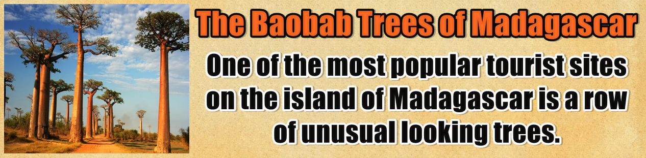 http://www.nerdoutwithme.com/2014/02/the-baobab-trees-of-madagascar.html