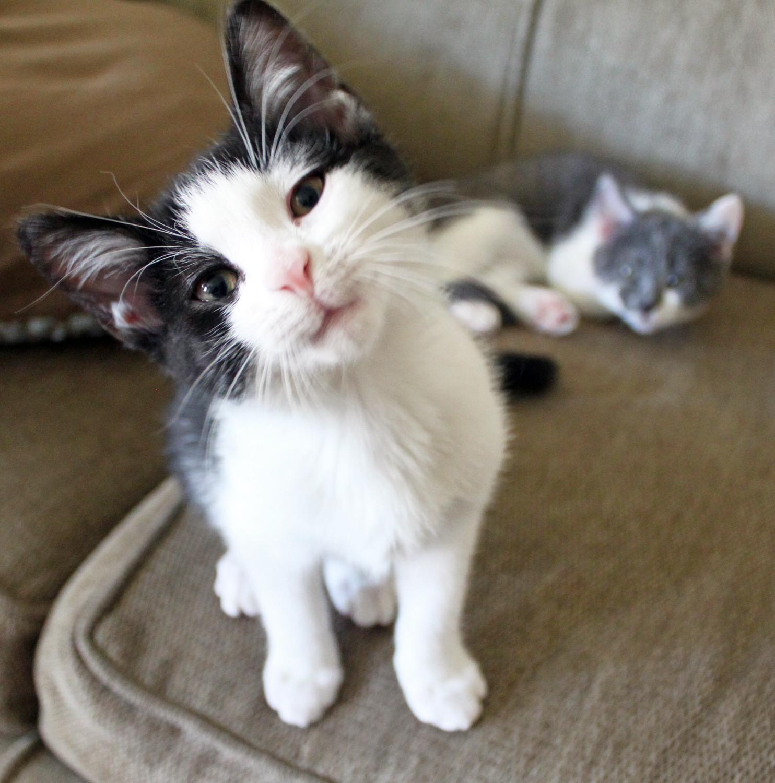 Cat: I Love Funny Animal