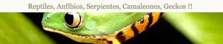 Foro de Reptiles