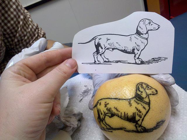 Dogs Shoulder Tattoos for Girls
