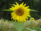 Join TallaHappy Sunflowers