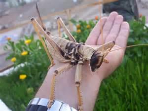Grasshopper poop - photo#13