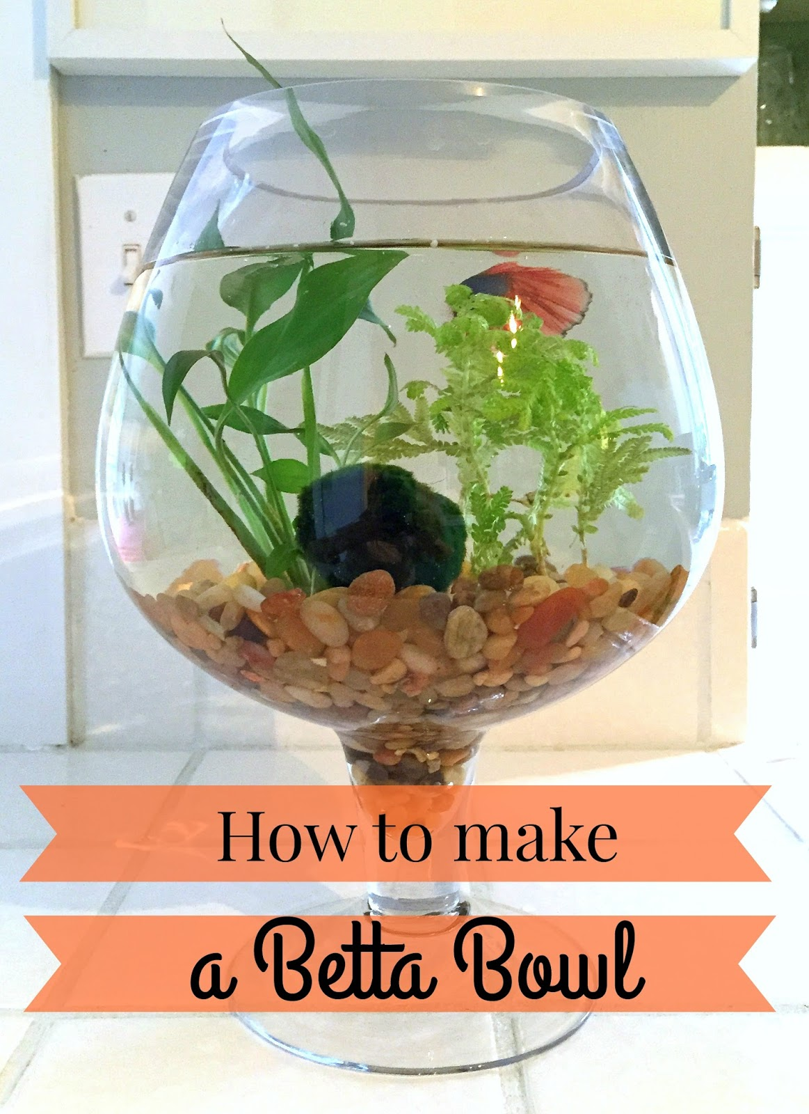 The perfect gift for an animal lover a betta fish bowl for How to make a fish bowl