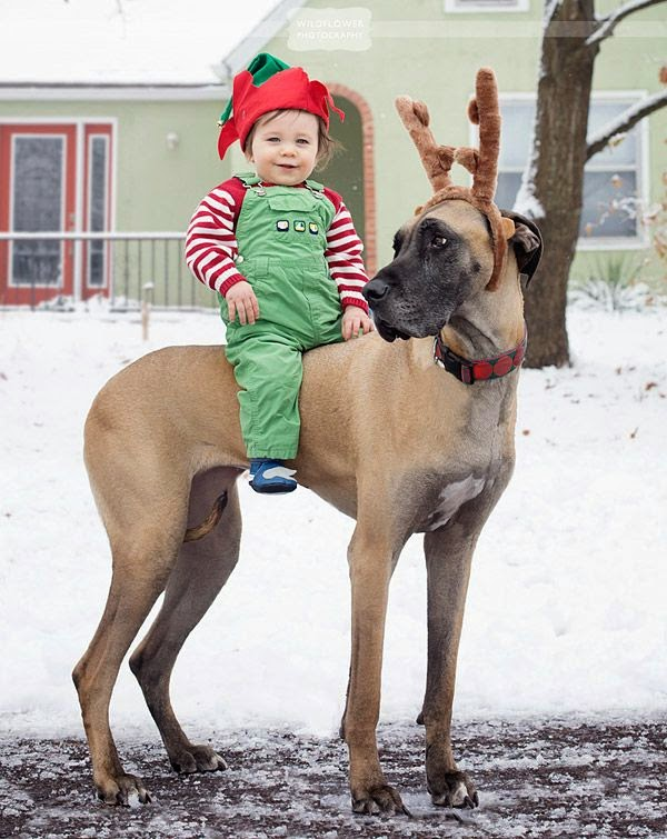 Top 5 Great Dane Dogs You have Ever Seen