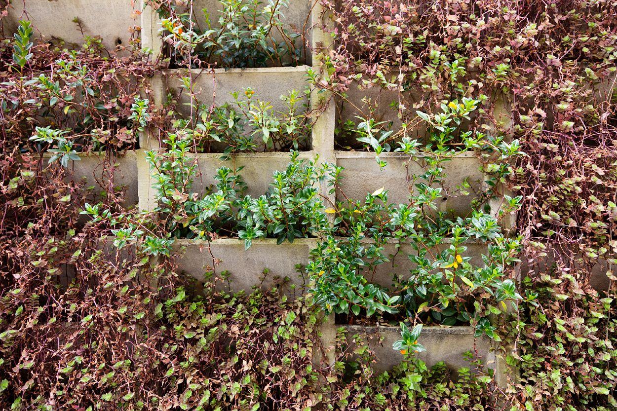 Jard n vertical con m dulos de hormig n jardines for Modulo jardin vertical