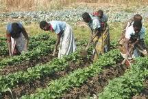 Moçambique: Primeiro-ministro considera projeto PROSAVANA prioritário