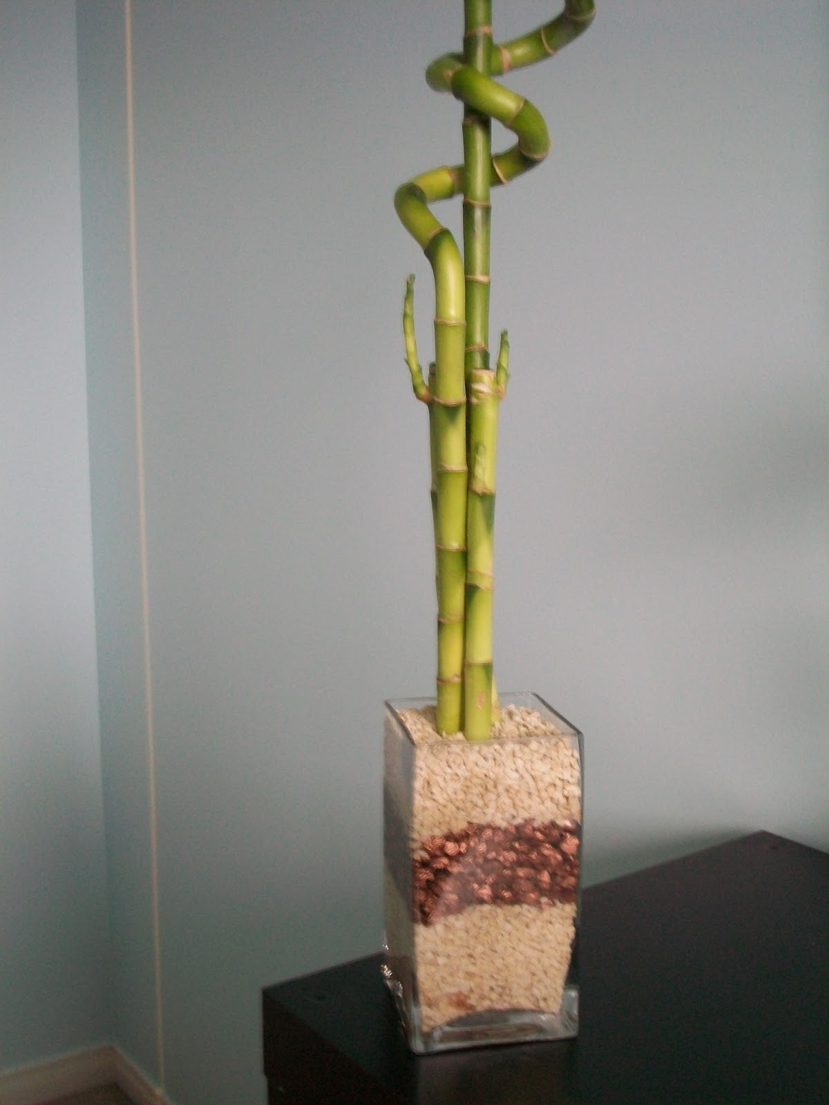 lucky bamboo faq wedding flowers made easy. Black Bedroom Furniture Sets. Home Design Ideas