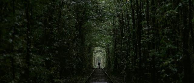 Čudna šuma oslikava realnost Srbije