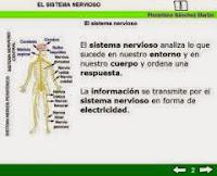 http://cplosangeles.juntaextremadura.net/web/edilim/tercer_ciclo/cmedio/las_funciones_vitales/la_funcion_de_relacion/el_sistema_nervioso/el_sistema_nervioso.html