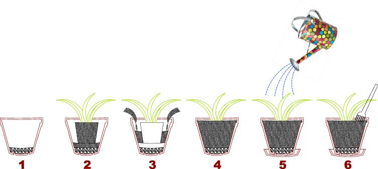 Jardines arquitectura cultivar en macetas for Pasos para sembrar una planta