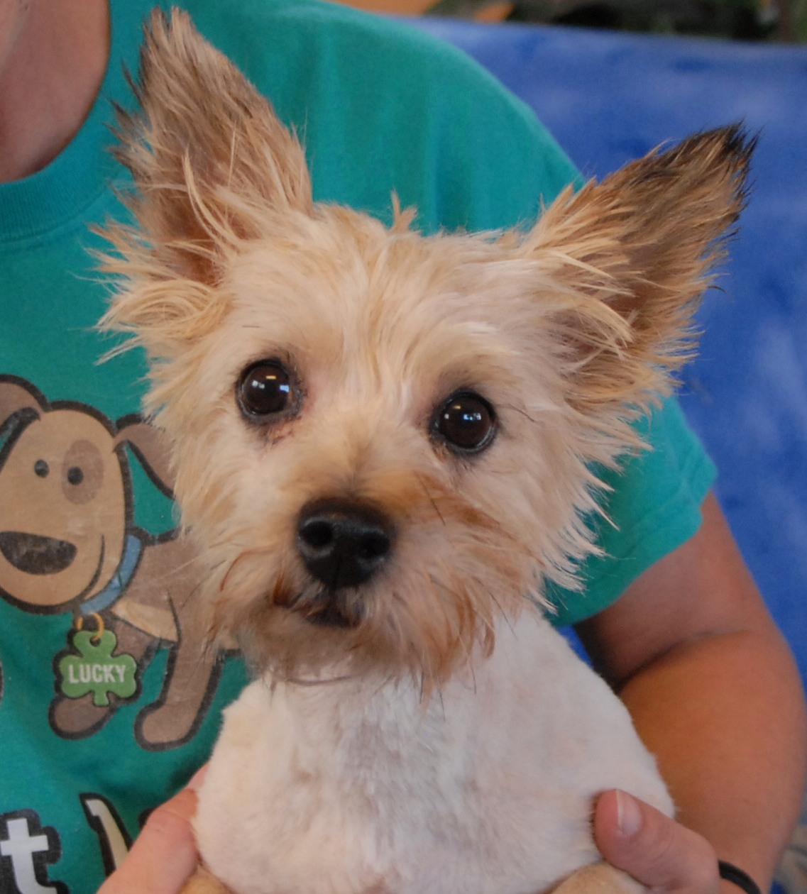 Nevada SPCA Animal Rescue: No one has ever told me I'm pretty before.
