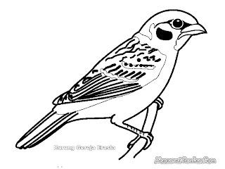 Mewarnai Gambar Burung Gereja Erasia