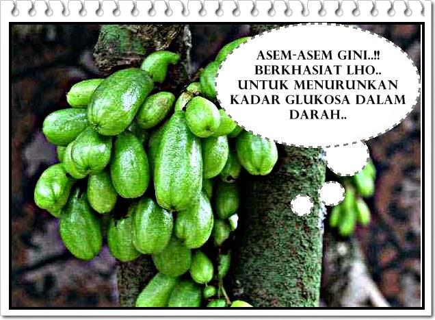 manfaat buah belimbing wuluh