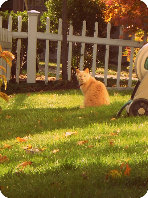New England Cat