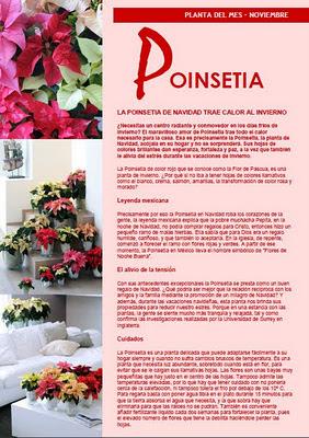 ponsetia