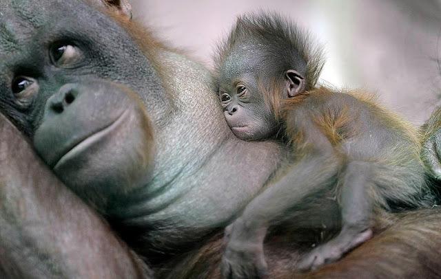 Madres y sus crias