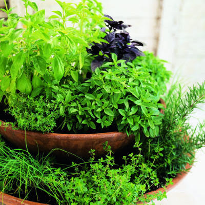 Live life love and laughter making a herb garden for Patio herb garden designs containers