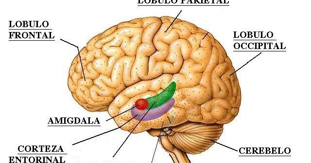 Resenhas para Cem Bilh es de Neur nios (1)
