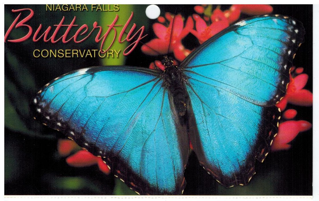 random musings niagara falls butterfly conservatory. Black Bedroom Furniture Sets. Home Design Ideas