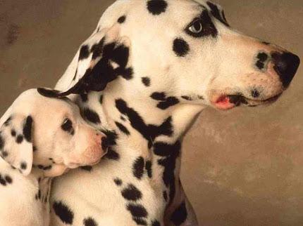 wallpaper anjing yg lucu
