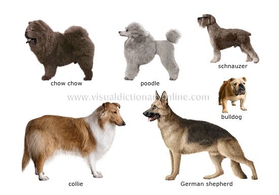 Scottish Dog Breeds