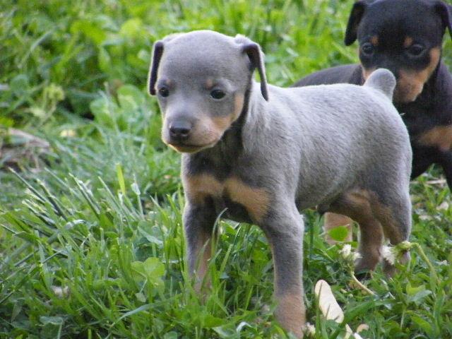 Puppy Dog Breeds Photos