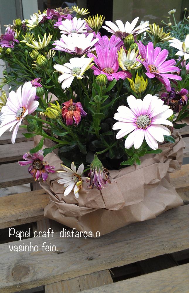 flores-italia