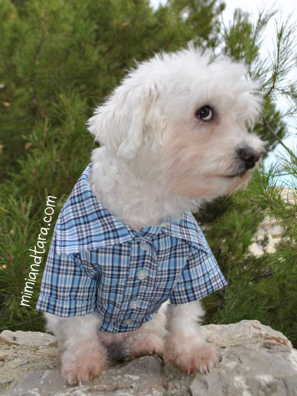 Hawaiian Fabric Dog Collars