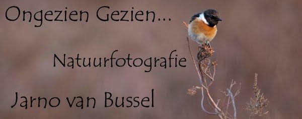 Jarno van Bussel Fotografie