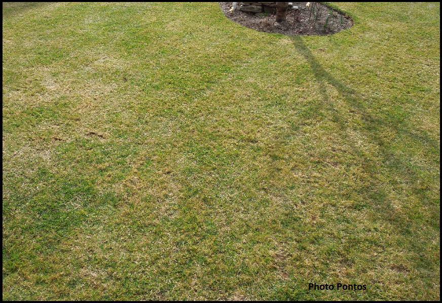 Un giardino di perenni in ticino l 39 arieggiatura del prato - Sacchi di terra per giardino ...