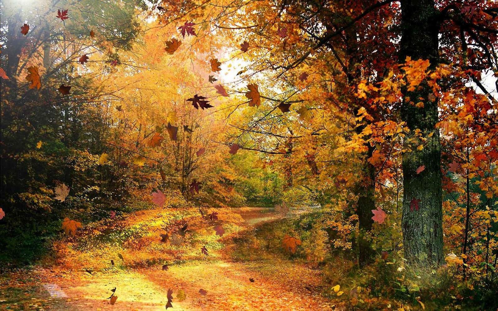http://1.bp.blogspot.com/-eN8QKBUPndQ/UEuMTYA8W8I/AAAAAAAAG-o/p22iiA1IiZI/s1600/hd-prachtige-herfst-achtergrond-met-bomen-en-een-weg-bezaaid-met-herfstbladeren-wallpaper-foto.jpg