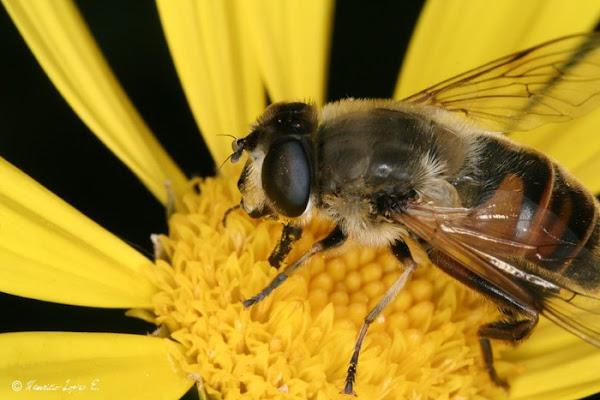 Que significa soñar con abeja