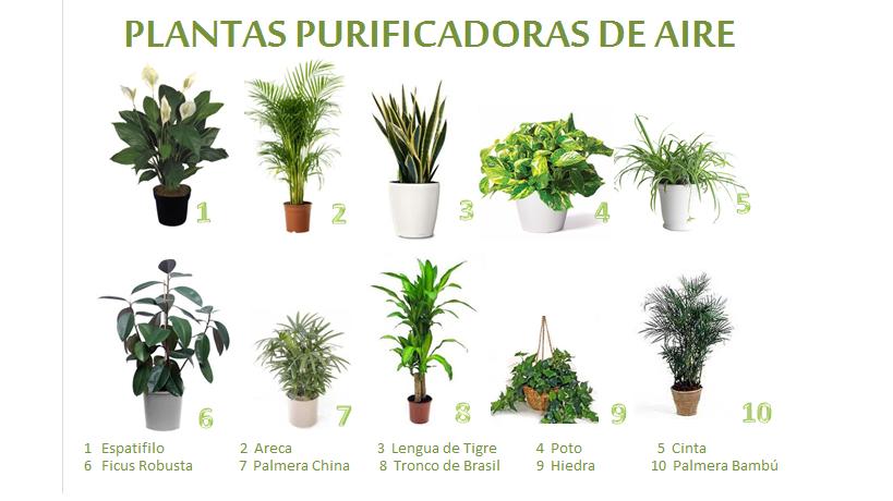Tipos de plantas y cactus for Tipos de plantas para jardin