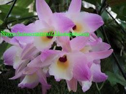 http://NetaArtescriativas2.blogspot.com