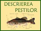 descrierea pestilor