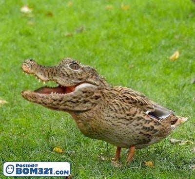 Jika Haiwan Aneh Kepala, Badan Lain