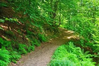 Caso, ruta a la cascada del Mongayu, bosque del monte Saperu
