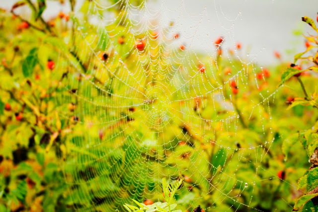 Jasmine Zhu photography spider web in dew