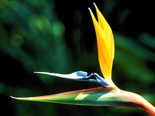 بالصور اغرب واعجب 18 زهرة حول العالم روزعه