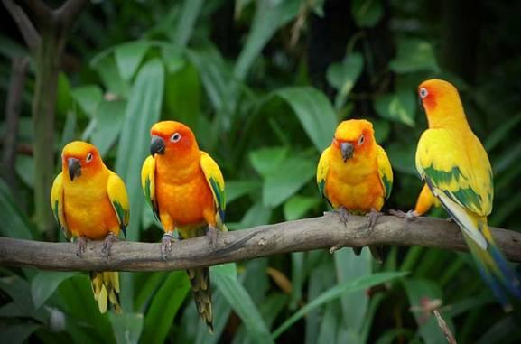 sanseviera bunga jiwa aeiroura lovebird 7 tanya amp jawab