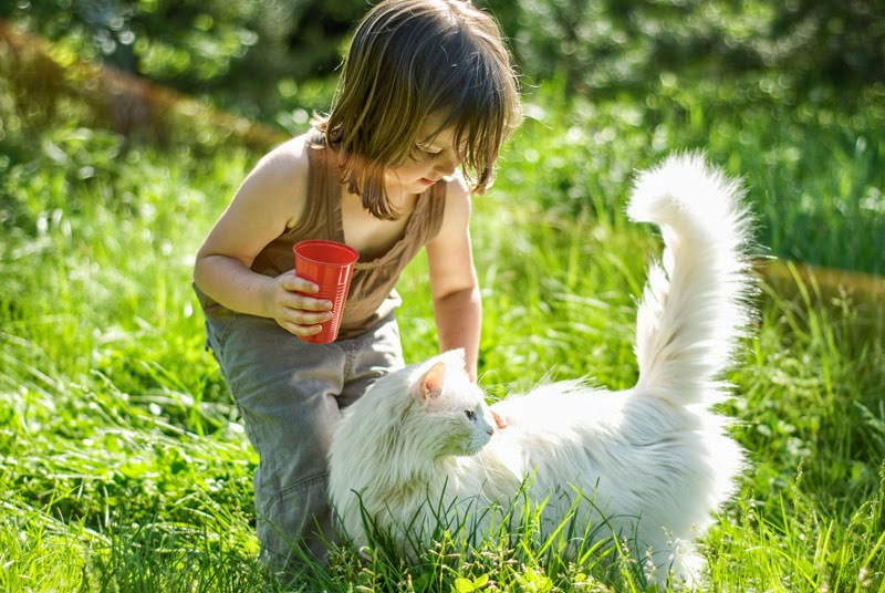 Young children's interactions with pets are mostly social